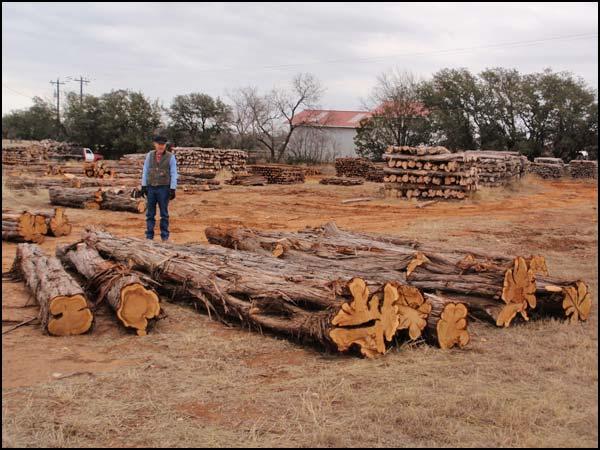 Haynes Cedar Company - Texas Mountain Cedar Fence Posts and More