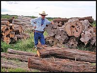 large cedar milling logs at Haynes Cedar Yard in Johnson City, Texas
