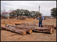 Haynes Cedar Yard - Amazing cedar milling logs up to 20' long!