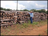Do your cross fences with wire cedar posts - save money!  Haynes Cedar Yard has a good supply